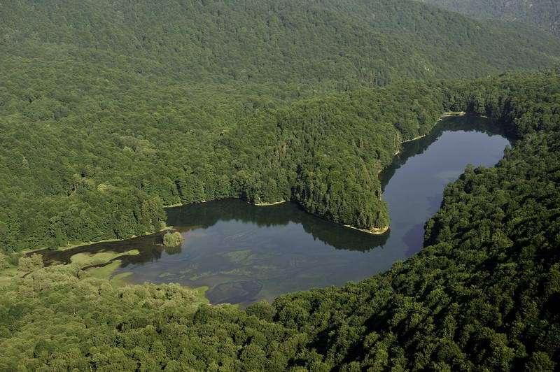 Биоградска гора
